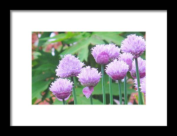 Flower Framed Print featuring the photograph Stand Tall by Ian MacDonald