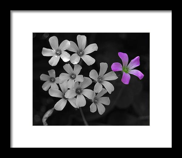 Flower Framed Print featuring the photograph Stand Up Stand Out by Maggy Marsh