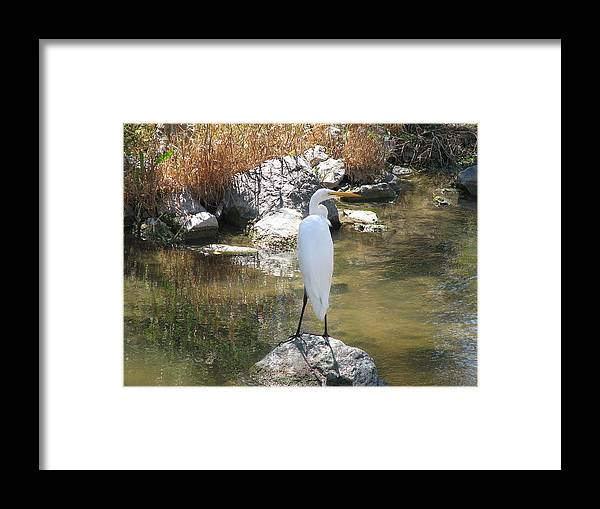 Loon Framed Print featuring the photograph Standing Alone 2 by Kathy Roncarati
