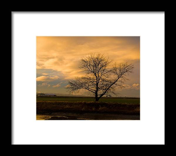 Photography Framed Print featuring the photograph Standing Alone by Joel Brady-Power