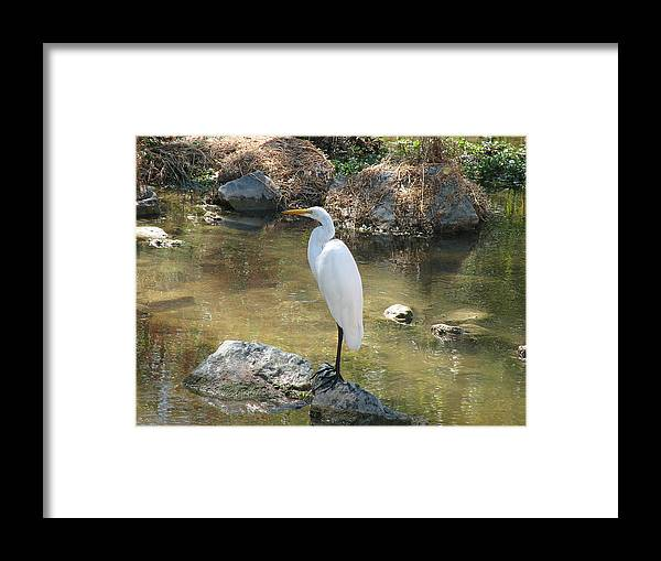 Loon Framed Print featuring the photograph Standing Alone by Kathy Roncarati
