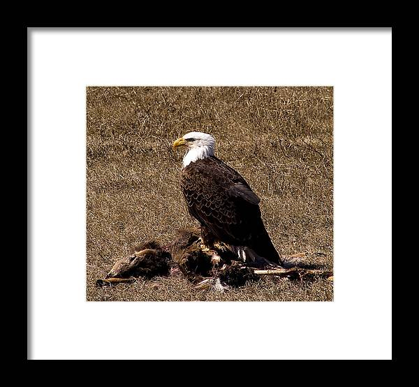 Nature Framed Print featuring the photograph Standing Guard by Bob Krzmarzick