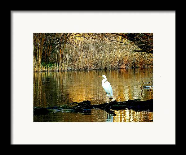 Egret Framed Print featuring the photograph Standing On Shakey Ground by Kendall Eutemey