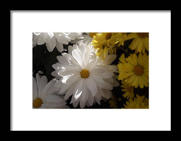 Flower Framed Print featuring the photograph Standing Out In A Crowd by Kat Dee