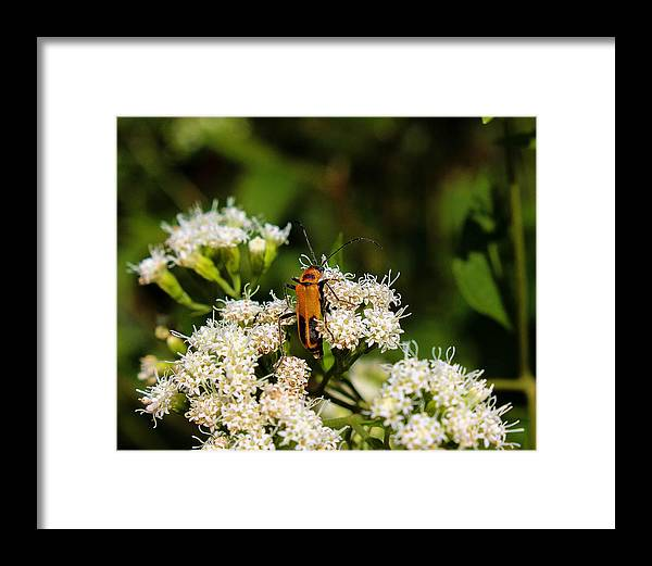 Bug Framed Print featuring the photograph Standing Out by Jessica Fronabarger
