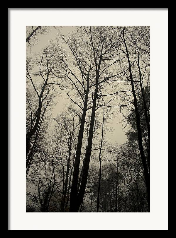 Trees Framed Print featuring the photograph Standing Tall by Ayesha Lakes