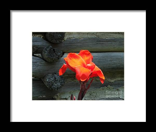 Logs Framed Print featuring the photograph Standing Tall by Judy Waller