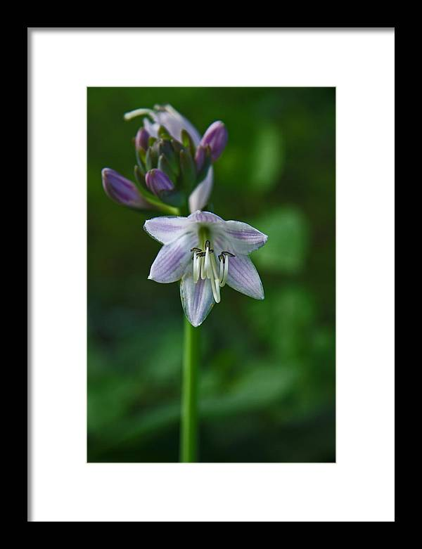 Flower Framed Print featuring the photograph Standing Tall by Ron Murray