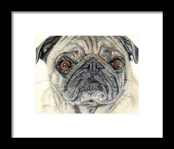 Dogs Framed Print featuring the drawing Stanley by Joanne Stevens