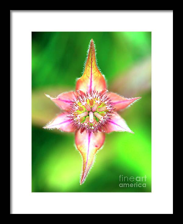 Star Framed Print featuring the photograph Star In Lurie Garden by John Rizzuto