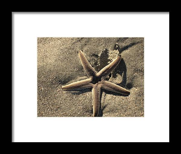 Star Of The Sea Framed Print featuring the photograph Star Of The Sea by Susanne Van Hulst