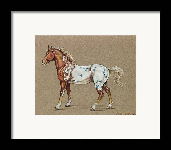 Horse Framed Print featuring the drawing Star Spangled Horse by Eden Alvernaz