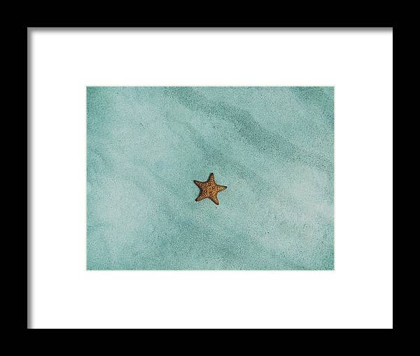 Starfish Framed Print featuring the photograph Starfish by Billy Soden