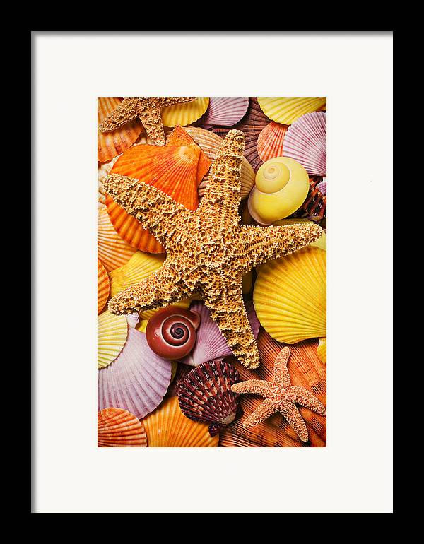 Starfish Framed Print featuring the photograph Starfish And Seashells by Garry Gay