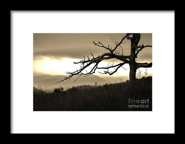 Tree Framed Print featuring the photograph Stark And Alone by Julie Lueders