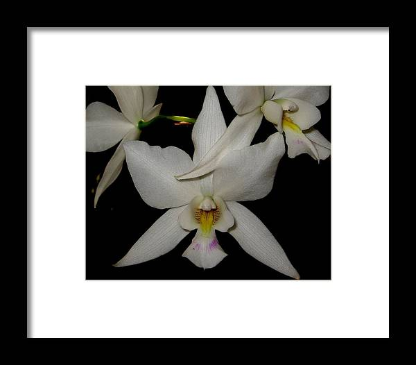 Orchid Framed Print featuring the photograph Starlight by Betnoy Smith