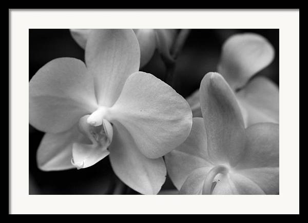 Orchid Framed Print featuring the photograph Starlight by Sally Engdahl