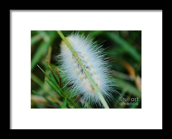 Caterpillar Framed Print featuring the photograph Static by Virginia Levasseur