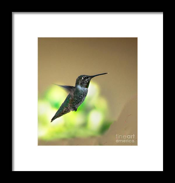 Birds Framed Print featuring the photograph Stationary by Robert Bales
