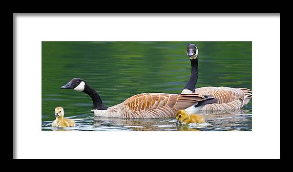 Birds Framed Print featuring the photograph Stay Close by Taylor Howe