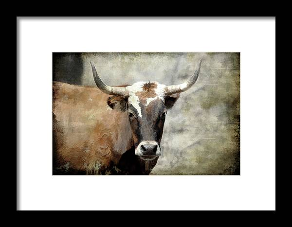 Steer Framed Print featuring the photograph Steer Bull by Athena Mckinzie