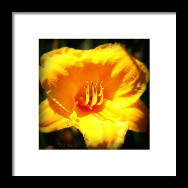 Flower Framed Print featuring the photograph Stella by Tina Meador