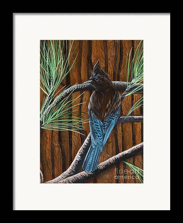 Bird Framed Print featuring the painting Stellar Jay by Jennifer Lake
