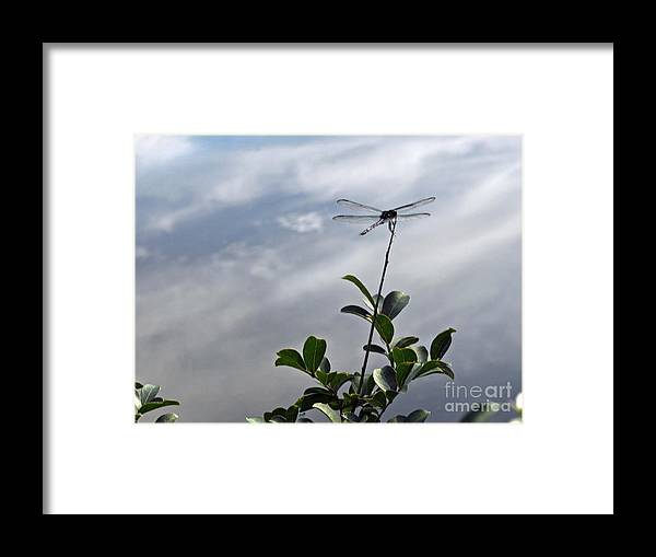 Dragonfly Framed Print featuring the painting Stick In Da Mud by Amanda Sanford