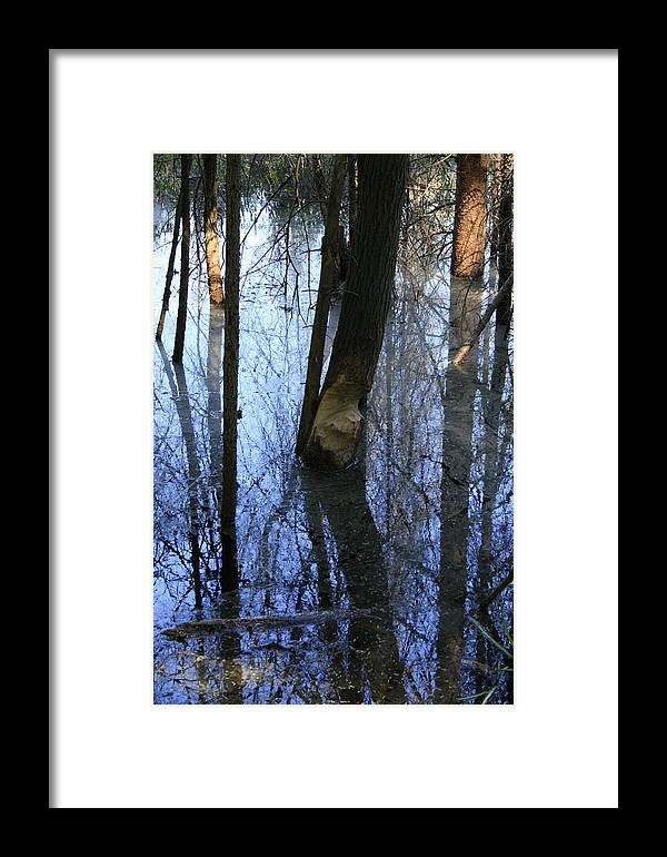 Bog Framed Print featuring the photograph Still by Alan Rutherford