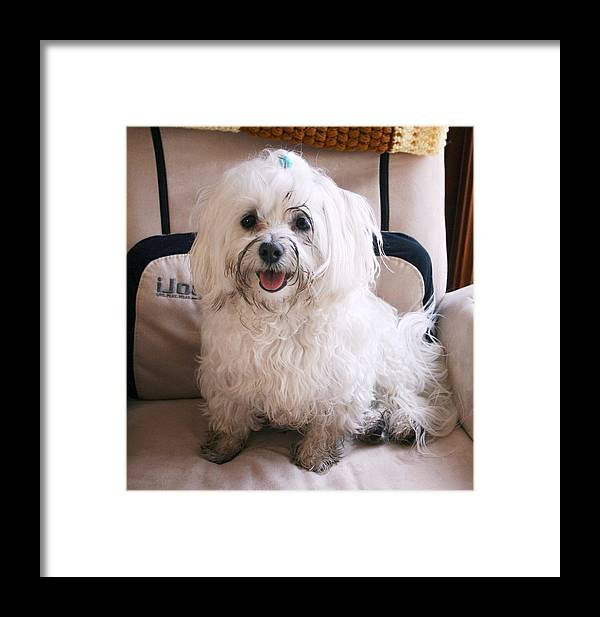 Photography Maltese Dog Framed Print featuring the photograph Still Having Fun In The Mud by BJ Redmond