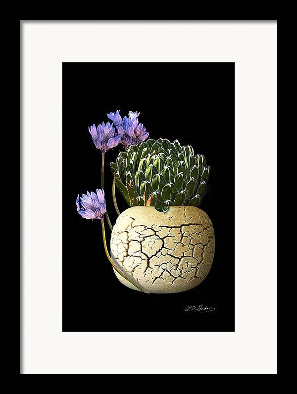 Photography Framed Print featuring the photograph Still Life by Richard Gordon