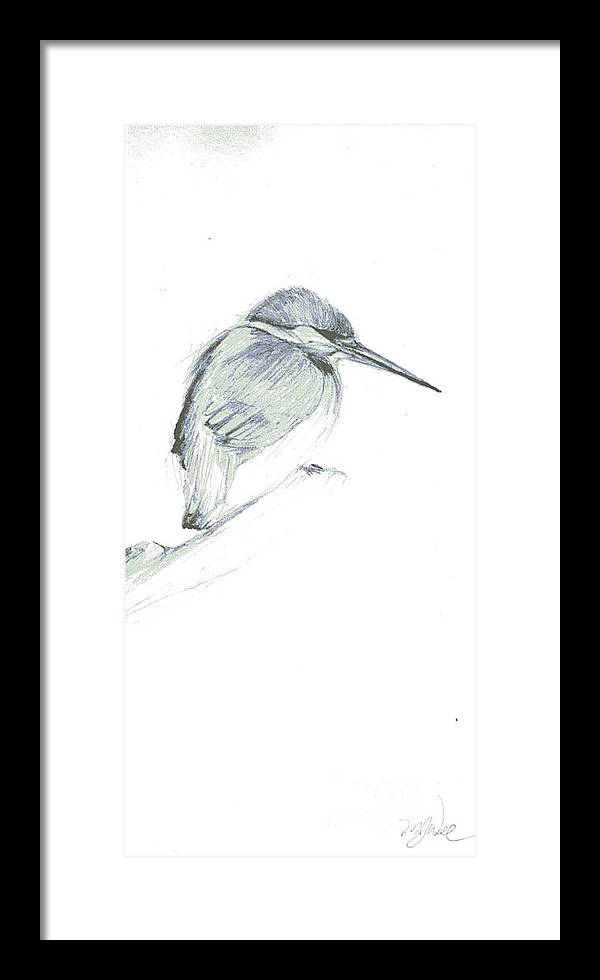 A Kingfisher Waiting For Prey- Pencil Drawing Framed Print featuring the drawing Still by Mui-Joo Wee