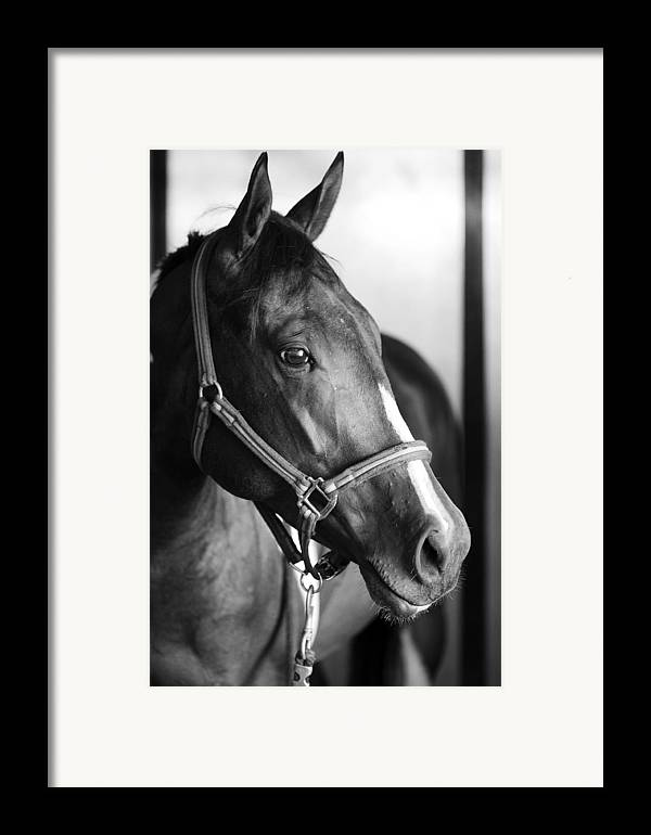 Horse Framed Print featuring the photograph Horse And Stillness by Marilyn Hunt