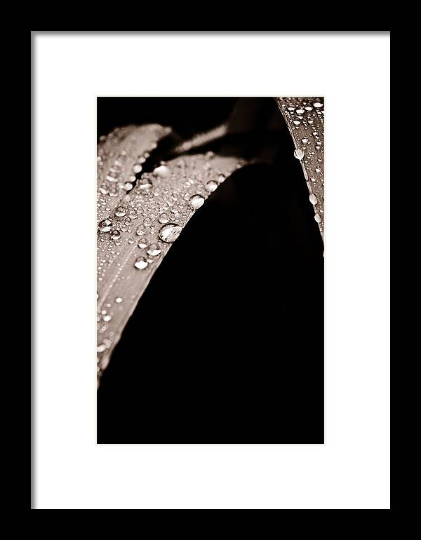 Iris Framed Print featuring the photograph Stillness by Matthew Saindon