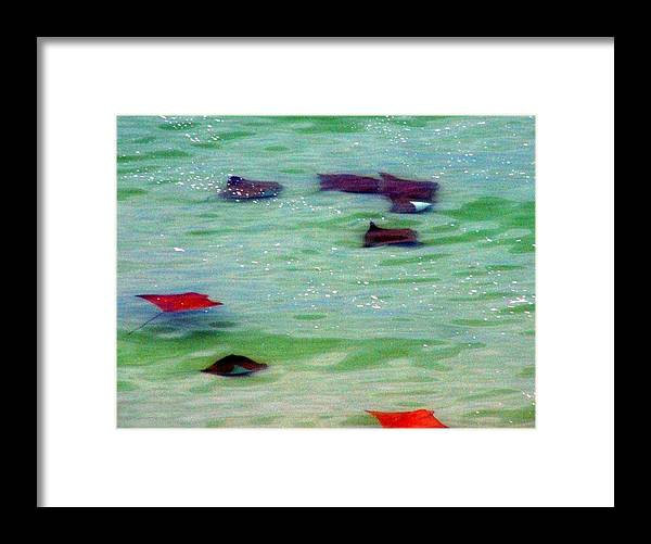 Sting Rays Framed Print featuring the digital art Sting Rays by Kenna Westerman