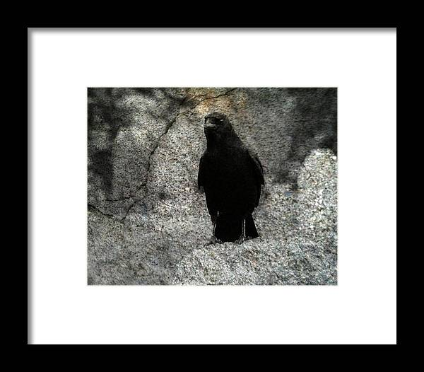 Crow Art Framed Print featuring the photograph Stone Gray by Gothicrow Images