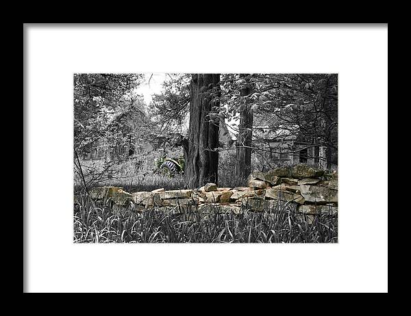 Color Desaturation Framed Print featuring the photograph Stonewall Deere by Dylan Punke