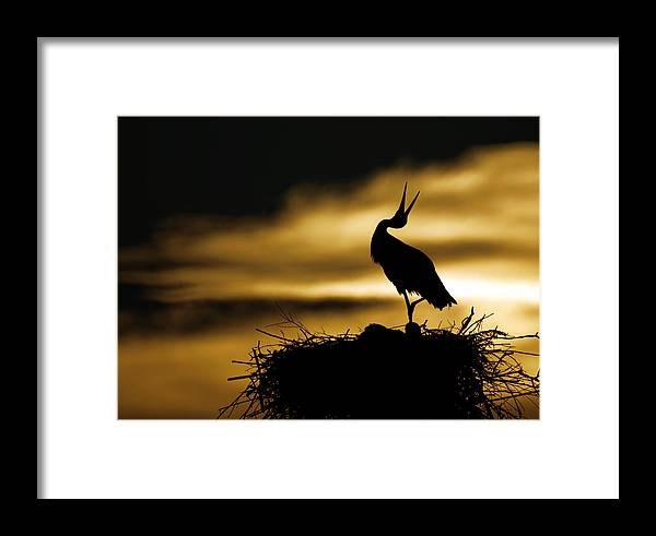 Stork Framed Print featuring the photograph Stork In Sunset by Dean Bertoncelj