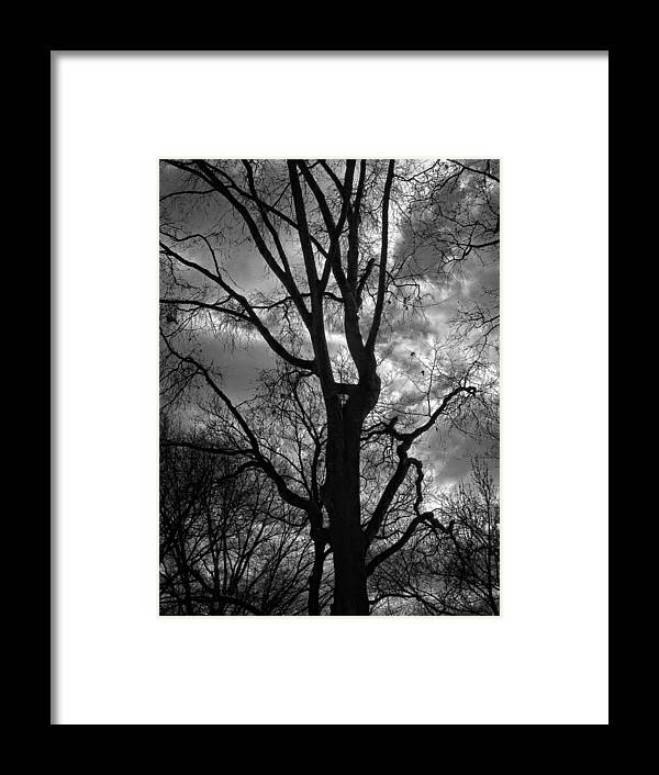 Trees Framed Print featuring the photograph Storm Clouds And Trees by Robert Ullmann