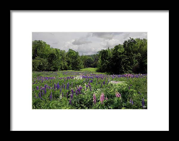 Lupine Framed Print featuring the photograph Storm In The Lupine by Wayne King