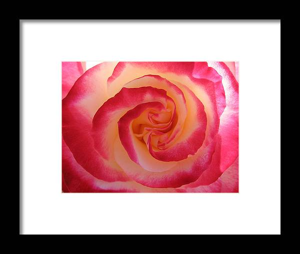 Rose Framed Print featuring the photograph Strawberry Swirl by Kathy Roncarati