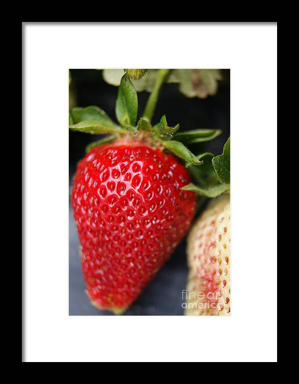Fruit Framed Print featuring the photograph Strawberry by Tina McKay-Brown