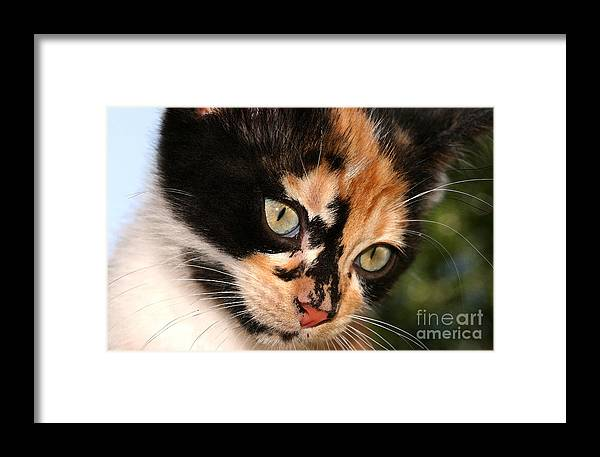 Cat Framed Print featuring the photograph Stray Kitten by Steve Augustin