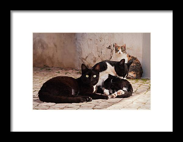 Cats Framed Print featuring the photograph Street Cats - Portugal by Barry O Carroll