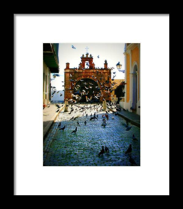 Pigeon Framed Print featuring the photograph Street Pigeons by Perry Webster