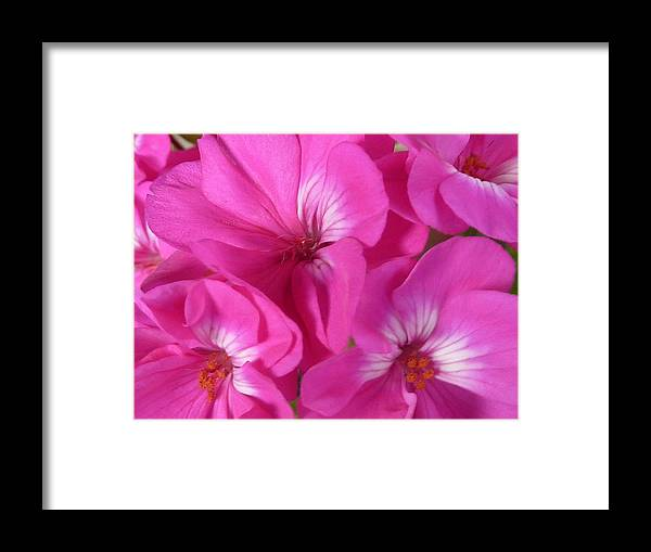 Flower Framed Print featuring the photograph Strength And Beauty by Melanie Moraga
