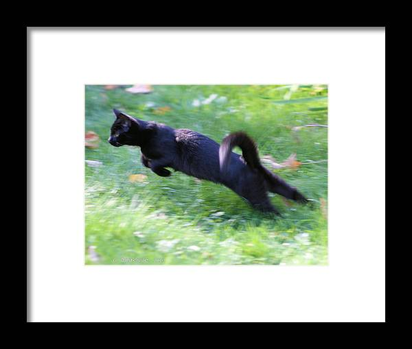 Cats Framed Print featuring the photograph Strike Mode by Carolyn Postelwait