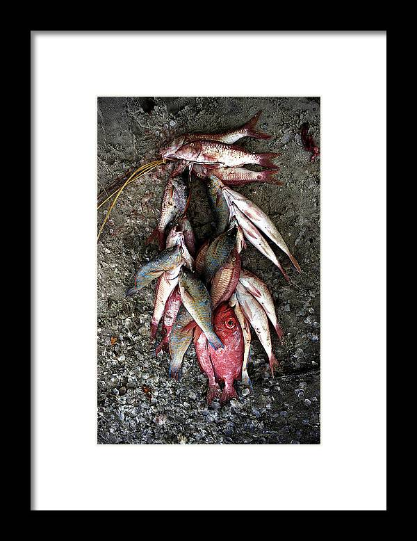 Fish Framed Print featuring the photograph Stringer Of Fish by Marcus Best