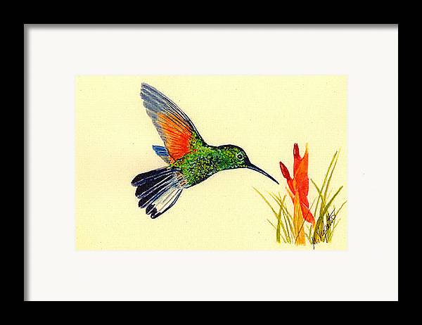 Birds Framed Print featuring the painting Stripe Tailed Hummingbird by Michael Vigliotti