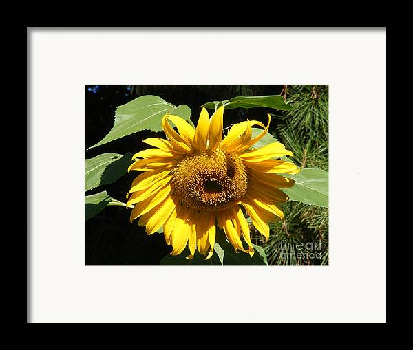 Landscape Framed Print featuring the photograph Strolling Through The Sunflowers by Gail Salitui